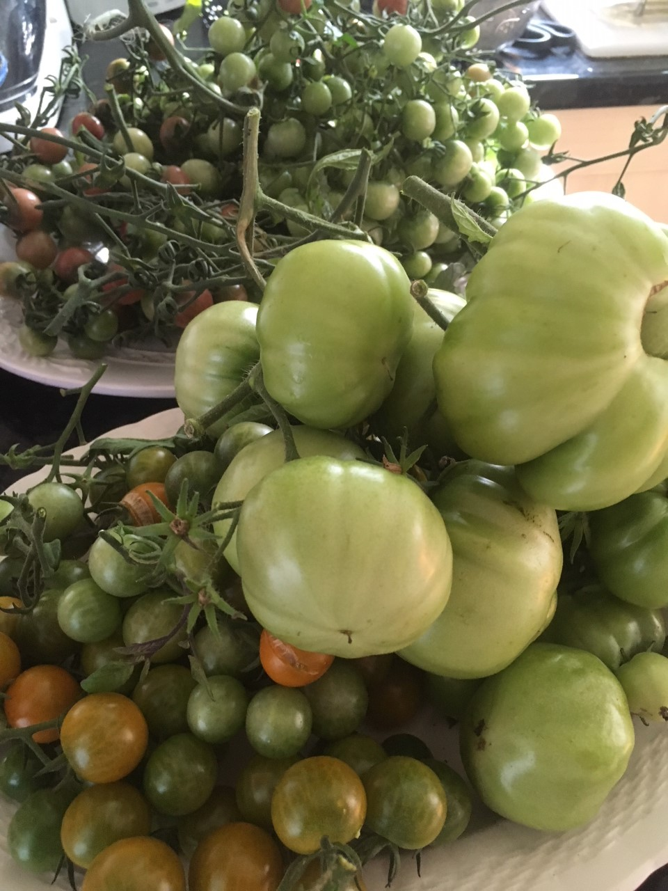 Green toms indoors.jpg